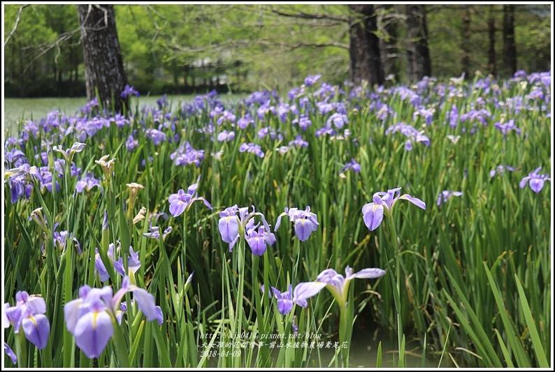 雲山水植物農場鳶尾花-2018-04-33.jpg