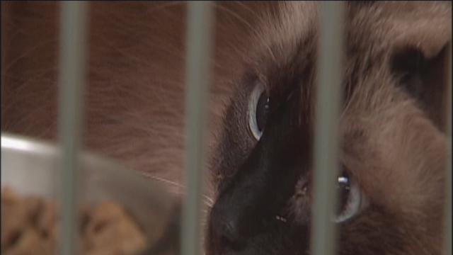Kern County Animal Shelter Prepares For The Big Move