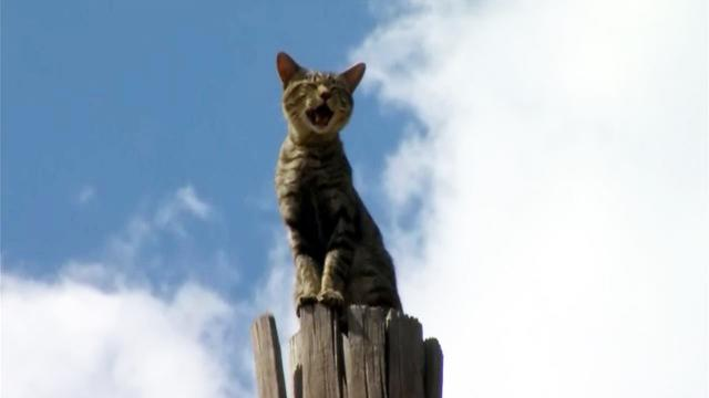 Watch: Stray cat rescued from utility pole