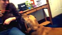 Dog Hates Can of Compressed Air