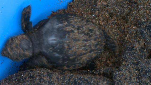 Northern Cyprus offers safe haven for endangered turtles