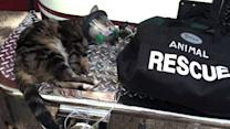 Cat saved with oxygen mask