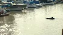 Whale swims into luxury Buenos Aires dock neighbourhood