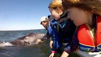 Video shows baby whale right next to boat