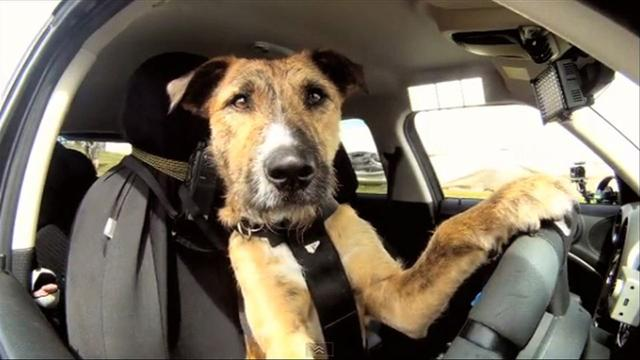 Inside Scoop: Keep your eyes on the road and paws on the wheel