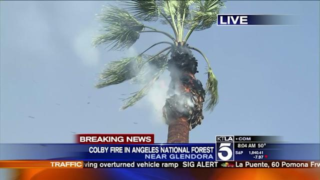 Burning Palm Tree Branch Falls on Woman Trying to Douse Neighbors Yard