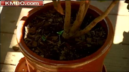Potted plants pose fire danger on decks