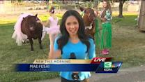San Joaquin County Fair kicks off today
