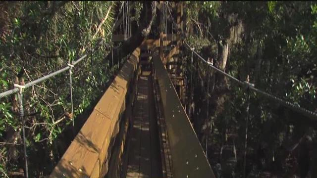 ABC Action News: Weekend Edition Everyday Adventures Myakka Canopy