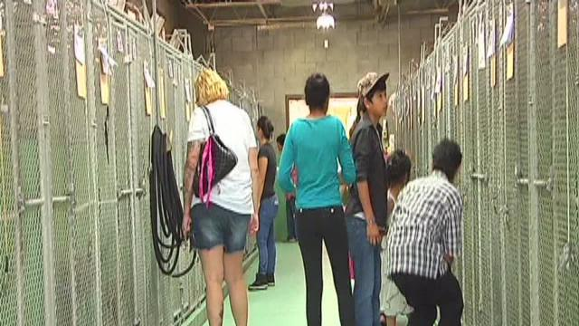 Kern County Animal Control to move by end of month