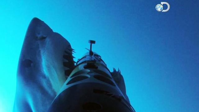 'Jaws'-Dropping Video of a Shark Attack in Action
