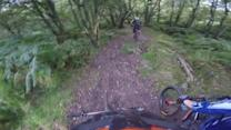 Mountain Biker Faceplants into Tree
