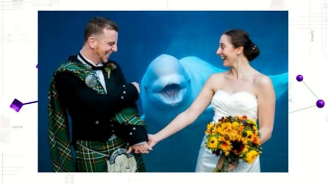 Beluga Whale Photobombs Newlyweds