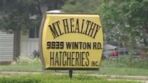Mt. Healthy Hatcheries Linked To Salmonella Outbreak