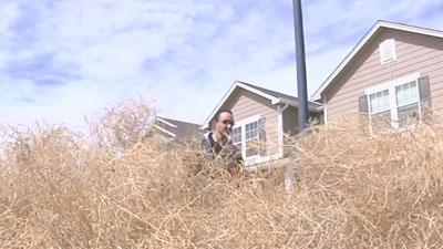 Tumbleweeds Invade Parts of the West