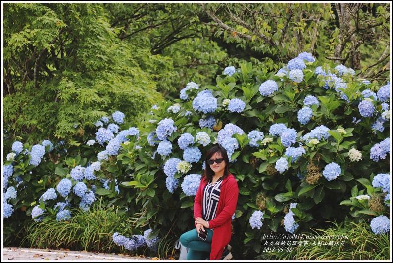 赤柯山繡球花-2018-06-28.jpg