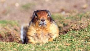 Department Of Interior Bilked Out Of $18 Million In Funding By Con Gopher