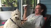 Westie dog adorably gives kisses on command