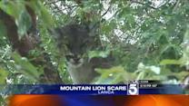 Mountain Lion Captured in Lancaster Neighborhood