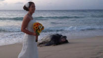 Huge Sea Turtle Crashes Wedding