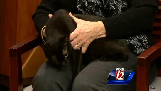 Pet Of The Week: Calypso