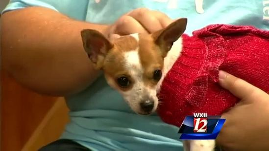 Noon Pet Of The Week: Chanel