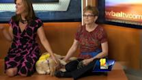 Canine companions make life easier for disabled