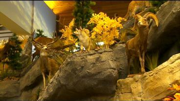 New 85,000-Square-Foot Cabela's Opening Soon In Woodbury