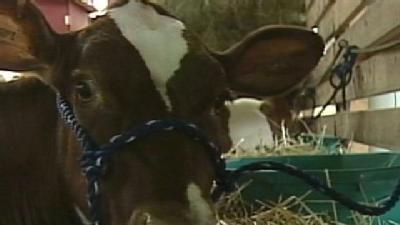 Keeping Animals Cool At State Fair Key For Farmers