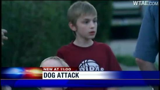 Dog bite sends boy to hospital
