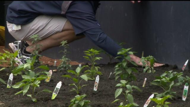 Padres Growing Peppers In The Bullpen