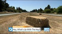 What The Hay? Why So Many Bales Along Highway 113?