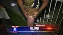 Man Shoots Pit Bull Claims Self Defense