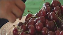 Cherry Festival at Murray Farms