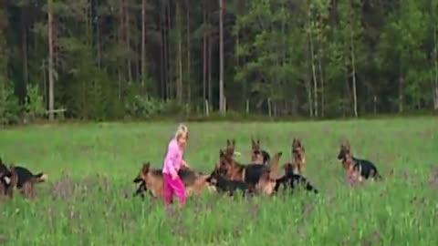 5-Year-Old Plays With 14 German Shepherds