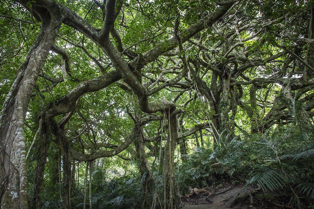 原鄉部落旅遊|鸞山部落 圖片來源:Tripbaa!達人帶路