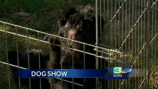 93rd Annual Sacramento Dog show at Cal Expo this Weekend