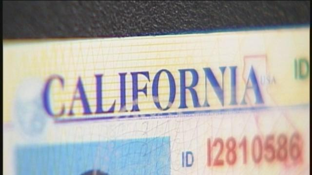 Illegal immigrants could be issued a drivers license