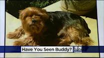 Dog-Napper Suspect Taunts Indiana Family