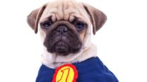 Pets Become Superheroes