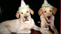 Riverside Family Asks For Help In Search For Missing Dogs