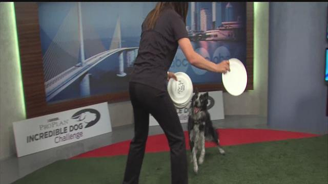 ABC Action News: Weekend Edition: Purina Pro Plan Incredible Dog Challenge