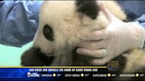 San Diego Zoo unveils the name of giant panda cub