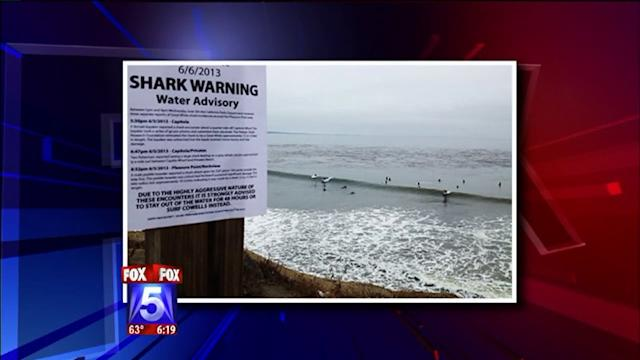 Fake Shark Warnings Highlight Beach Rivalry