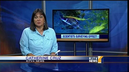 Scientists surveying impact of molasses to fish and coral