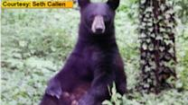 Bear sightings reported in Princeton, New Jersey