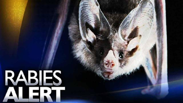 Cumberland Co. family exposed to rabies