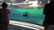 Sea Lion 'Worried' About Little Girl