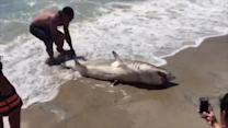 13-Year-Old Catches 200-Pound Shark