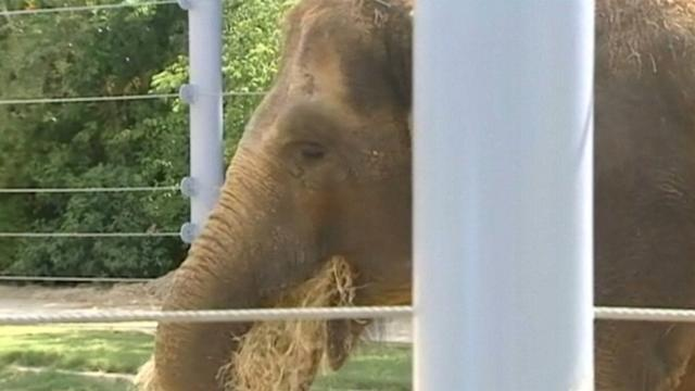 Pregnant Mom Must Lose Weight, and She's an Elephant